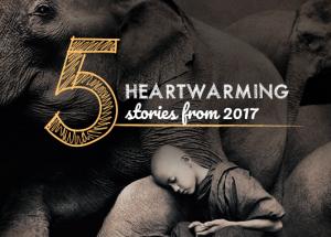 5-heartwarming-stories-blog (2)